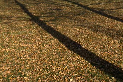 träd, skuggor, löv, höst