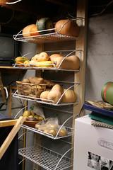 squash shelves 1