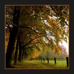 The Golden Season (Noorderland) Tags: autumn brown tree green colors yellow landscape lumix gold landscapes herfst nederland lane friesland beech beechtrees kollum goldencolors tz7 theunforgettablepictures noorderland beukenlaantje artofimages zs3 platinumpeaceaward bestcapturesaoi panasoniclumixtz7zs3 elitegalleryaoi mygearandme mygearandmepremium mygearandmebronze mygearandmesilver mygearandmegold naturesprime~halloffame naturesanct mygearandmeplatinum mygearandmediamond ilikethenatureplatinum betterthangoodhalloffamesuperstars