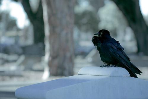 crow jane     revenge is a