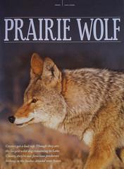 Coyote photo published (Hard-Rain) Tags: coyote illinois published batavia fermi fullpage winter2010 horizonsmagazine