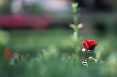 PORTUGAL - LISBOA - JARDIM BOTANICO - OLYMPUS OM ZUIKO 90MM FUJI PROVIA (a_alkhawarizmi) Tags: portugal fuji lisboa olympus jardim botanico om 90mm provia zuiko