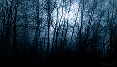 Blue Moon (Don Komarechka) Tags: blue trees shadow moon mist ontario canada silhouette fog night forest canon darkness branches spooky barrie canoneos5dmarkii