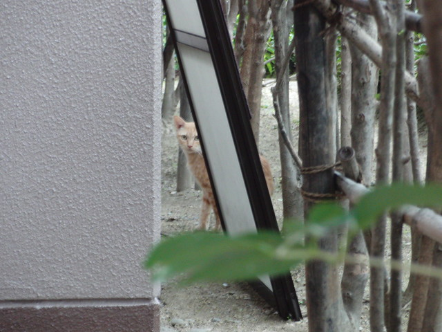 Today's Cat@2010-11-13
