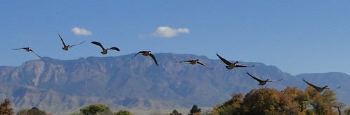 "geese and Sandias • <a style=""font-size:0.8em;"" href=""http://www.flickr.com/photos/10528393@N00/5171980117/"" target=""_blank"">View on Flickr</a>"