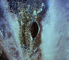 Ice (Sivva) Tags: blue winter wild macro ice nature water stone closeup frozen iceland frost north clear nordic icelandic náttura listaverk steinveggur sivva nálagt