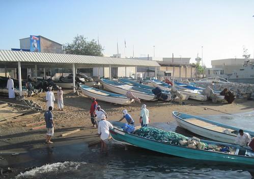 Teamwork Bringing Boat Full of Fish Into Shore