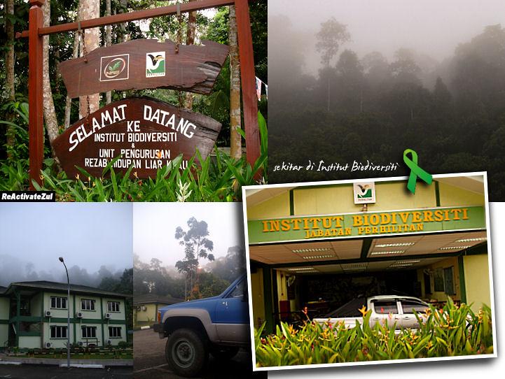 Institut Biodiversiti Bukit Rengit