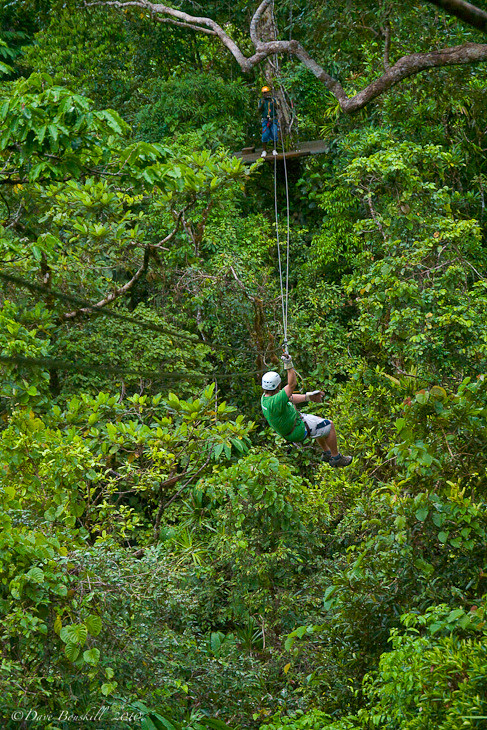 Rainforest Canopy from Zip Line in Fiji