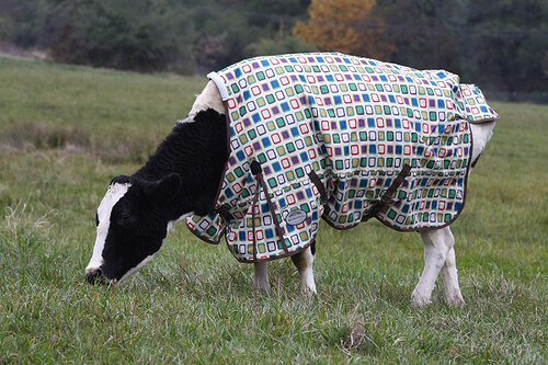 Horse Coats Not Just For Horses!