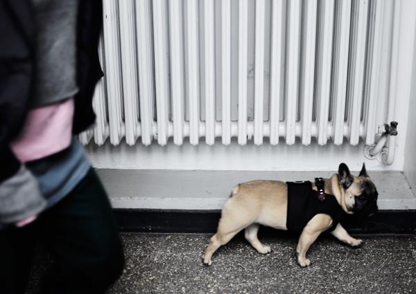dog in uni