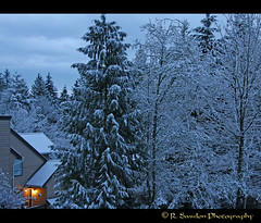 early snow (R. Sawdon Photography) Tags: trees snow earlymorning firstsnow warmlight rsawdonphotography