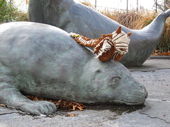 Albert on Seal (blart.versenwald.111) Tags: park ny newyork albert seal robbe