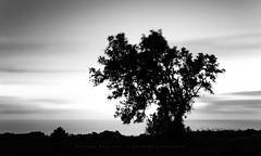 Back to black (RicardoBoa) Tags: longexposure sunset blackandwhite sintra lee hitech cascais sigma1020 pnsc canon50d