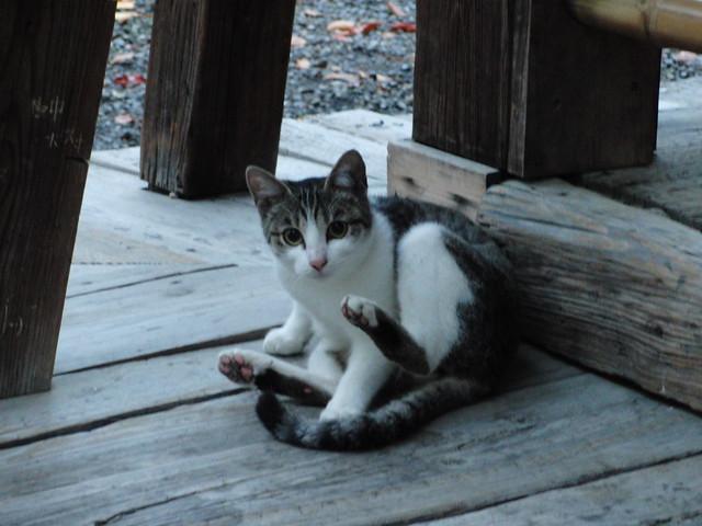 Today's Cat@2010-11-22