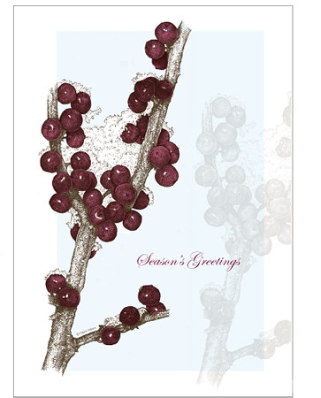 Christmas Winterberry, Ilex verticillata 5 x 7 greeting card