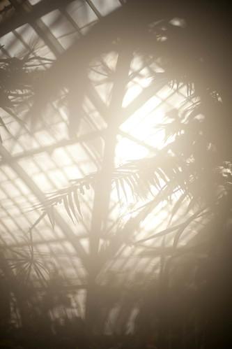 Lens Fog