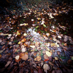 Rrepetition (tearoom) Tags: reflection water leaves puddle leaf holga exhibition pinhole e100vs 2010 fallenleaves 木津川アート