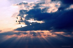 We give thanks for unknown blessings already on their way. (Violet Kashi) Tags: thanksgiving autumn light sunset sky birds silhouette thanks clouds rays beams
