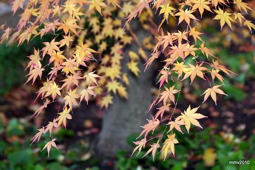 un poco más de otoño 25-11-2010 18-33-47