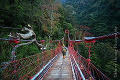 3_MG_2887-Tonpo, Xinyi Township, Nantou County, Taiwan 彩虹吊橋-情人谷-橋樑-山谷-枯樹-南投縣-信義鄉-東埔村