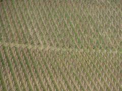 P1000063 (gzammarchi) Tags: italia natura campagna paesaggio collina geometria monocrome vigneto camminata itinerario imolabo
