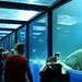 tunnel sous la mer