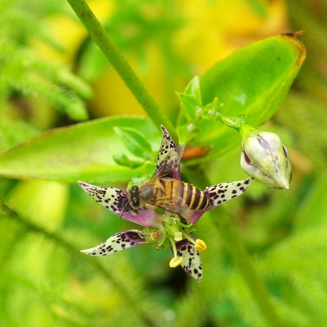 午餐中的蜜蜂,沒注意到危機就在眼前