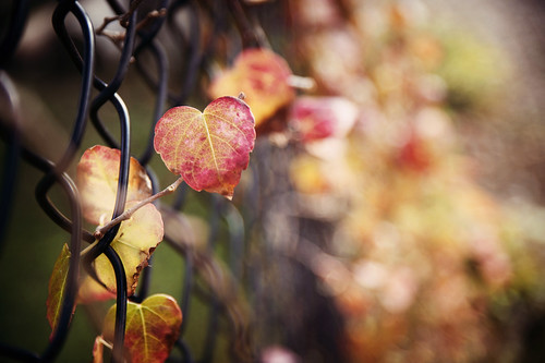 """Winter is an etching, spring a watercolor, summer an oil painting  and autumn a mosaic of them all."" -   Stanley Horowitz"