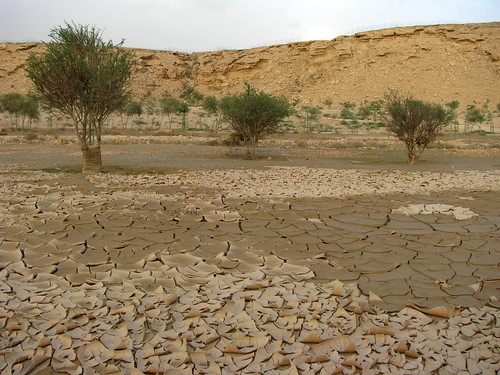 Wadi Hanifah after rain