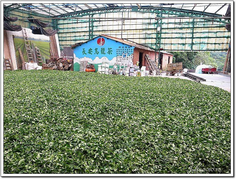 湖南茶廠 (4)