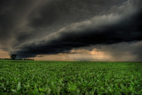 Storm Rolling in Over Bean Field