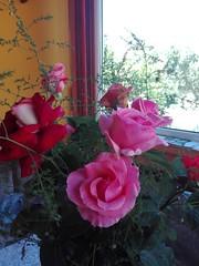IMG_20170528_122411 (Bobet22) Tags: anniversary zi de nastere birthday mother flowers trandafiri roses calla