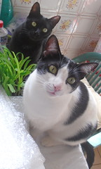Sam-Pá e Namastê, sempre juntos - DSC01437 (Dona Minúcia) Tags: art animal cat friends cute lovely sampá namastê grass food vase arte gato amigos gracinha fofo comida grama graminha vaso