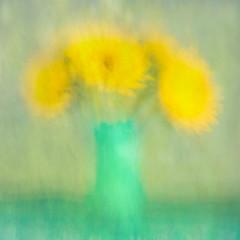 183/365 (Jane Simmonds) Tags: sunflowers intentionalcameramovement icm painterly impressionistic helianthus flower 183365 3652017