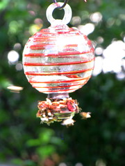 (suswhit) Tags: design hummingbird bees bad feeder invaded