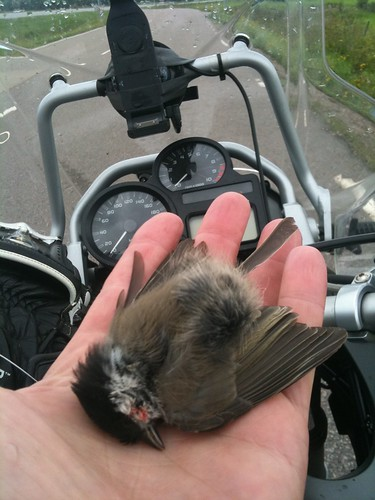 A swallow hit my bike.