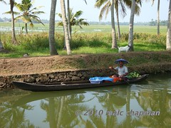Backwater boatman with umbrella hat (Malc ) Tags: india photo photos kerala malc backwater photosof malcc malcolmchapman malcolmpchapman