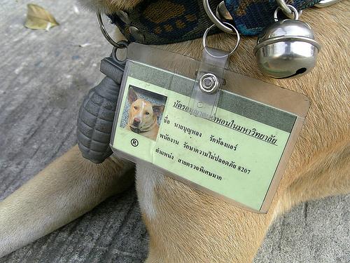 KMUTT-SecurityDog2