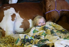 A girl and her cow. (Dean Ruben.) Tags: tractor girl animal barn relax happy cow warm child sleep farm fair blanket cuddle flies hay spencer calf lay spencerfair adorables
