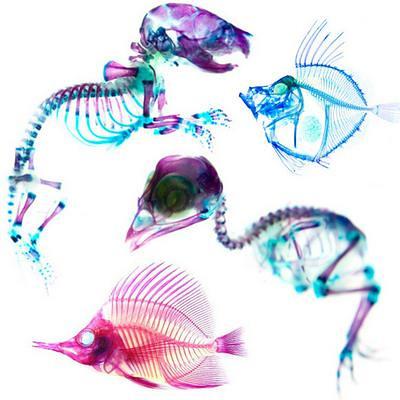 透明二重染色標本