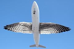 airbus (ayman_ay17) Tags: bird birds by design flying airbus a330 ayman designed