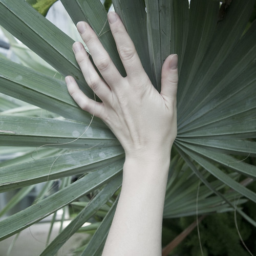 palm to palm
