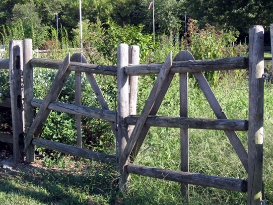 Wooden Fence with Weeds