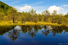 (Ovidiu H.) Tags: blue summer sky plants lake landscape europe romania florist carpathians reservation tokina1224f4 volcanicla