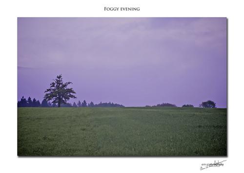 Foggy evening