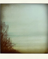 (provincijalka) Tags: sky texture square poem mood branches overcast surface minimal september feeling scratched pola treetop smellslikefall onablahday provincijalka abdulahsidran bylesbrumes oslusni upustumaglinu