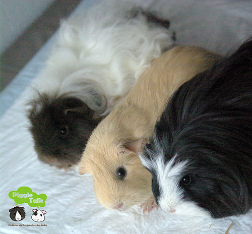 Toffee, Sookie and Miya