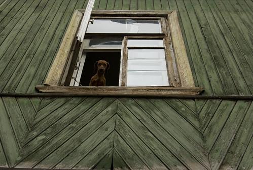 собачка ©  semeonka