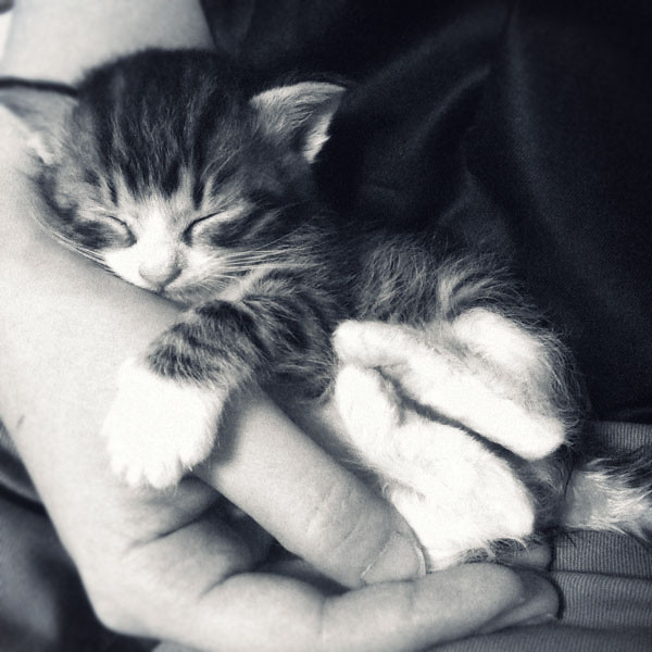 cute rescued kitten holding hand sleeping